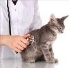 Ветеринарные клиники в Локне